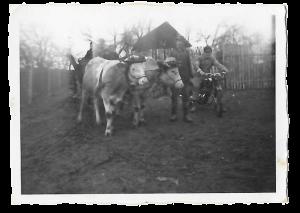 Damals gab es auch Oxen am Hof :)